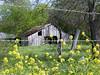 Springtime Barn - Texas