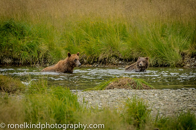 Momma bear and her cub.