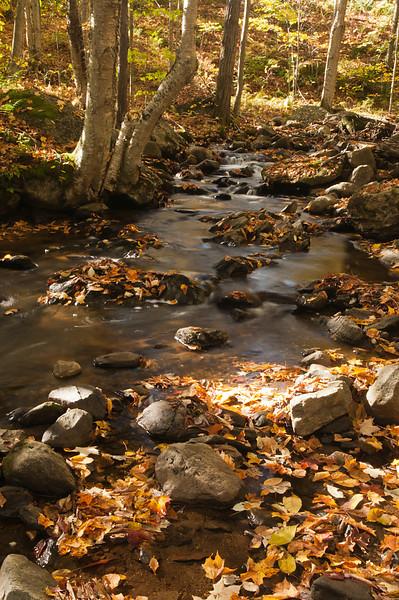 Woodland Stream 2