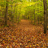 Leaves on the Lane