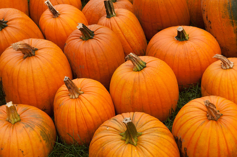 Pumpkins for the Pickin's