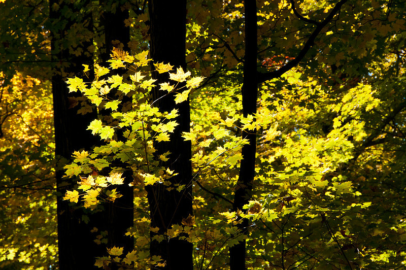 Afternoon Light in the Woods