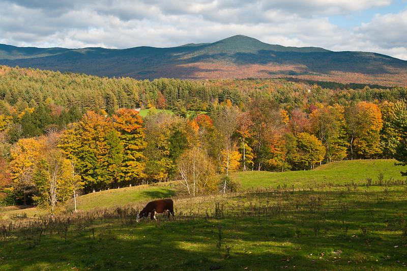 Autumn on York Hill