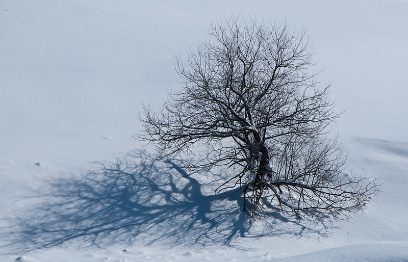 Winter Tree Shadow
