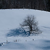 Winter Tree Shadow 2