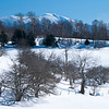 Winter Orchard and Mount Mansfield
