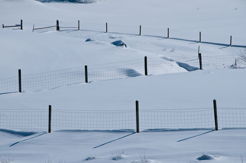 Snowy Field Fences