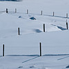 Snowy Field Fences