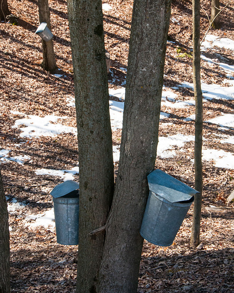 Two Sap Buckets 2013