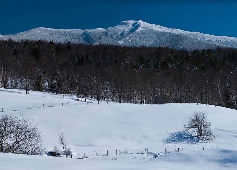 Snowy Fields_