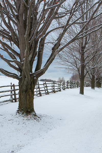 Winter Fences 2