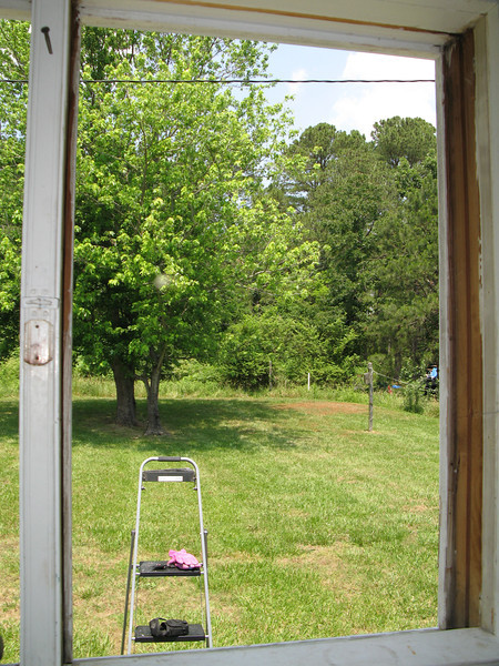 Kitchen window from inside, view out the back  yard.