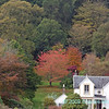 Autumn colours at Tighnabruich