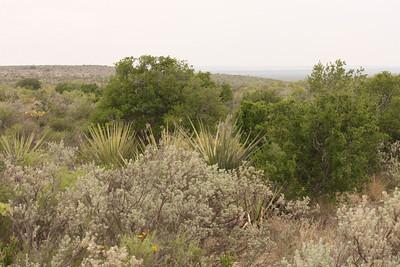 Trans-Pecos Texas 04/2013