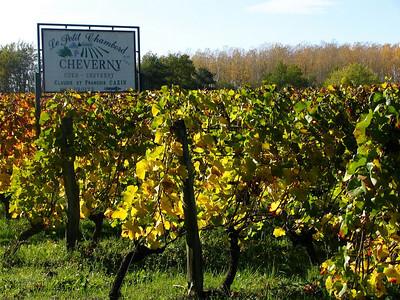 Vignoble Cheverny 02 C-Mouton