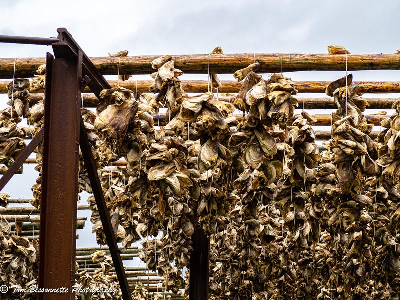 Fish heads drying