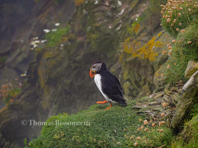 Decision in Shetland.