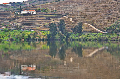 Vineyard in the Douro River Valley