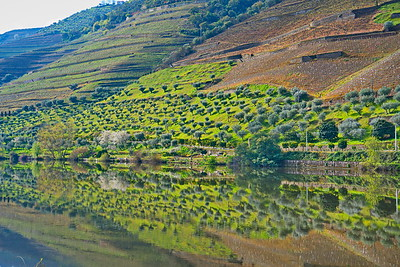 04142018_Pinhao-Portugal_Olive-grove_Reflection_750_6470