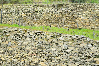 Vineyard Close to Pinhao