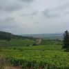 The vineyards go on forever.