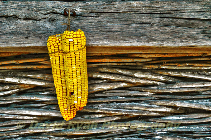 Drying corn on the side of a barn, Bucharest, Romania, Dimitrie Gusti National Village Museum