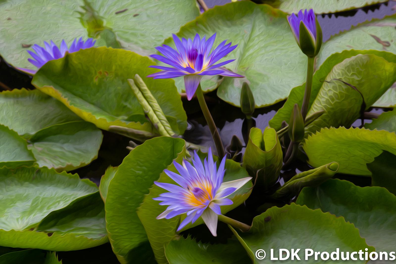 Pearl Lilies