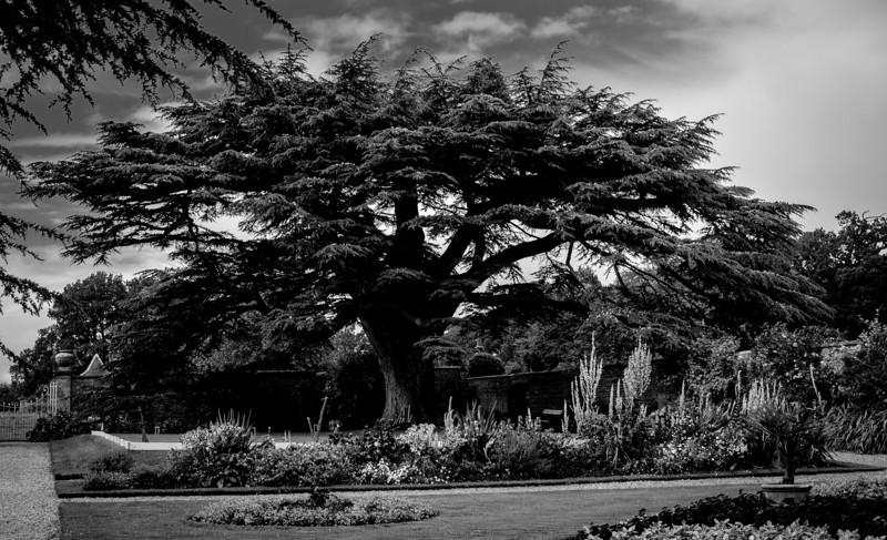 Tree, Canon's Ashby, Northamptonshire 3