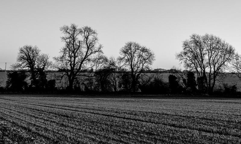 Trees, Horton, Northamptonshire