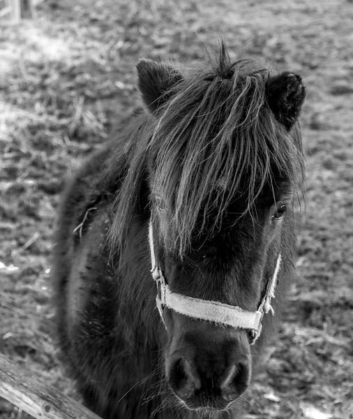 Horse, Piddington, Northamptonshire