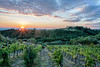 Our agroturimso hotel in rural Tuscany ... sunset across the vineyard. Not sure which one I like the most so I included all of them.