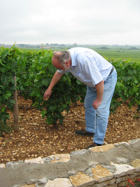 """""""Grape vines produce grapes, notwithstanding they are often sexually confused grapes."""""""