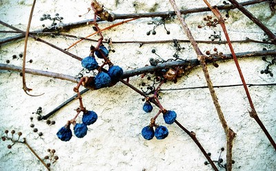 Vines on the wall 3.