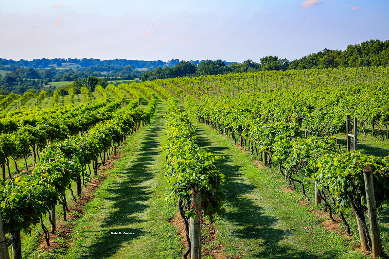 Lover's Leap Vineyards