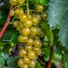 Wine Dew