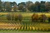 Vineyards - Fall Colour 10_DSC1407 (2006-10-22)