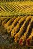 Vineyards - Fall Colour 07_DSC1380 (2006-10-22)
