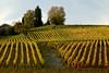 Vineyards - Fall Colour 08_DSC1386 (2006-10-22)