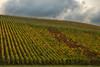 Vineyards - Fall Colour 02_DSC3721_DSC3722 (2005-10-22)