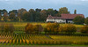 Vineyards - Fall Colour 09_DSC1391 (2006-10-22)