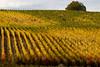 Vineyards - Fall Colour 06_DSC1362 (2006-10-22)