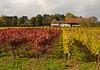 Fall Vineyards around Bourdigny