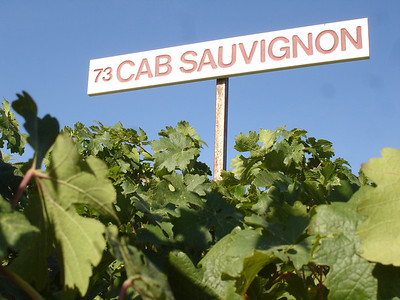 A block marker designating the 1973 planting of Cabernet Sauvignon at Red Willow Vineyard