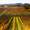 Chalk Hill/Alexander Valley, California in November 2012.