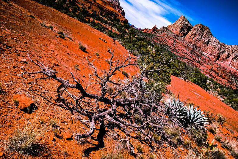 Dead Branch near Bell Rock.