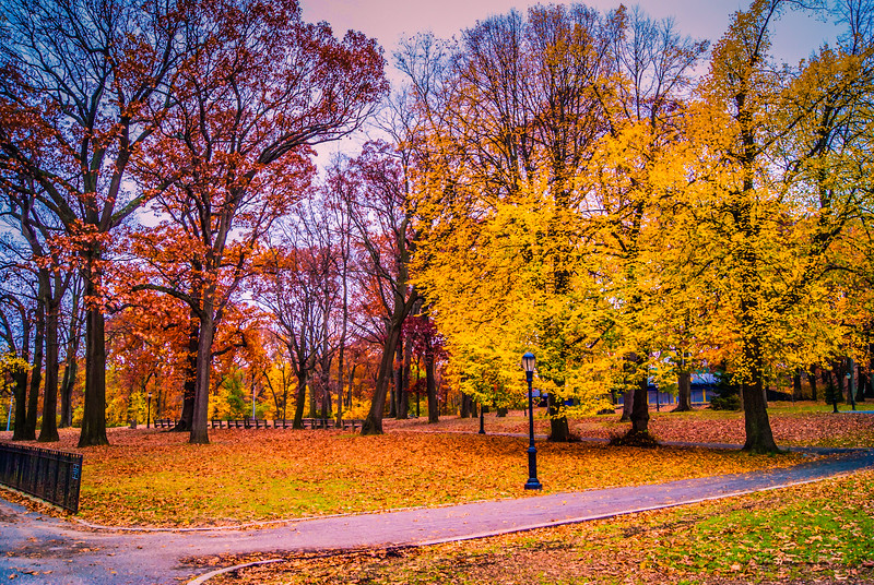 Leaves Changing in Forest Park NYC