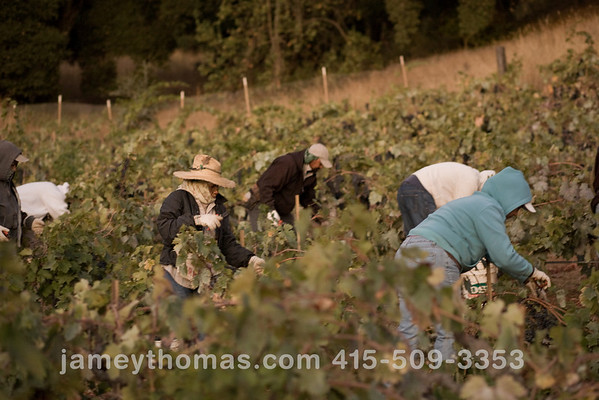 90930_Ridge_Harvest_030