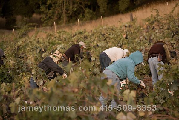 90930_Ridge_Harvest_031