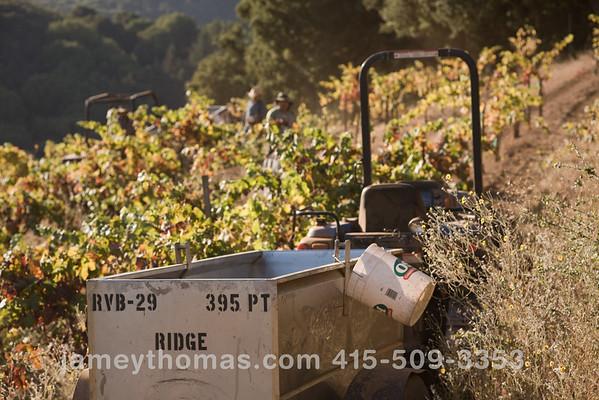 90930_Ridge_Harvest_241
