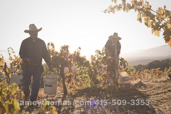 90930_Ridge_Harvest_193
